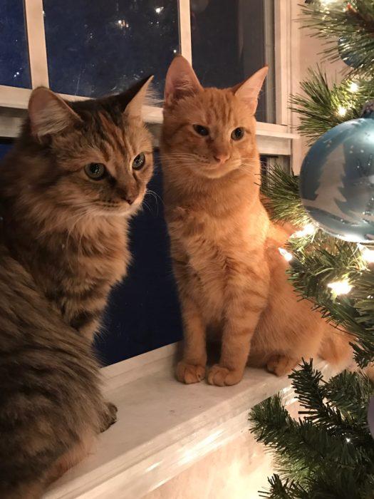 Gatos en navidad