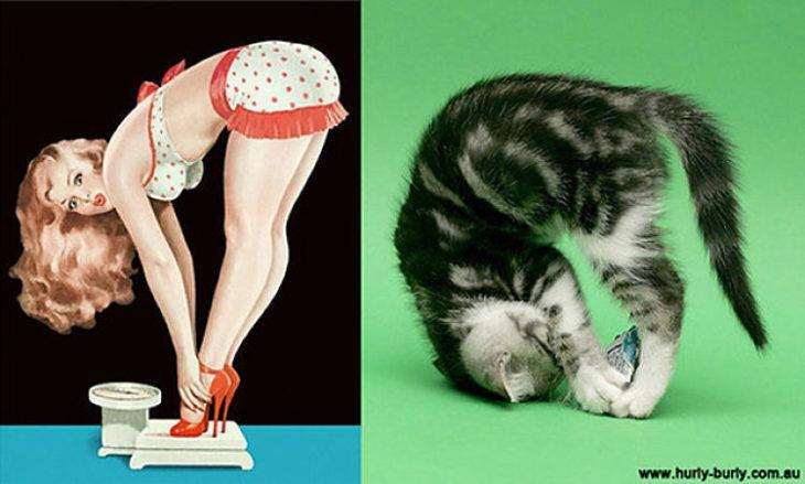 gato como chica pin-up estirado