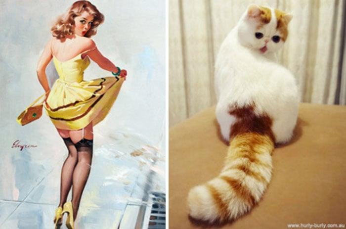 gato como chica pin-up viendo su vestido