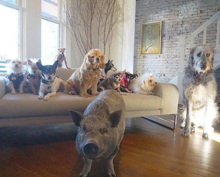 Mascotas sentadas en un sofá