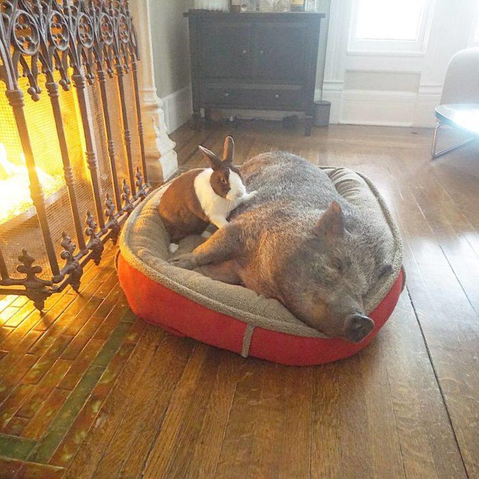 Conejo y cerdo recostados en una cama para perros