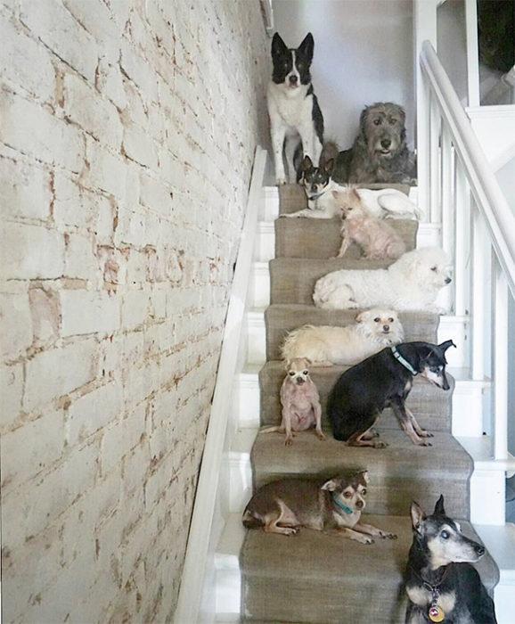Perros sentados en una escalera