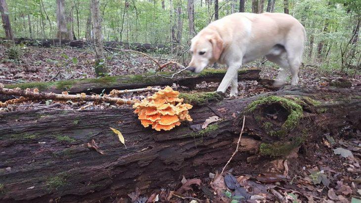 drew de paseo en el bosque