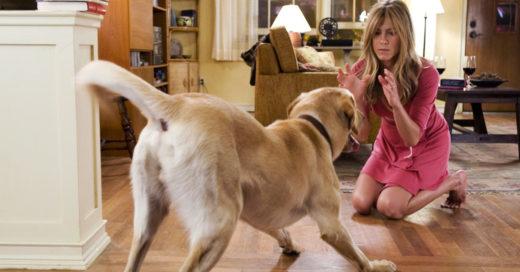 Cómo entrenar a tu perro como un experto
