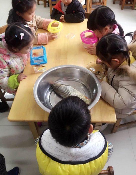 niños en una mesa con peces