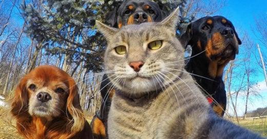 Este gato se toma las mejores Selfies de todos los tiempos