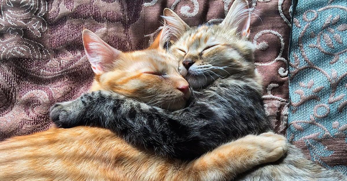 Esta historia supera cualquier cuento de hadas: ¡son los gatos más enamorados del mundo!