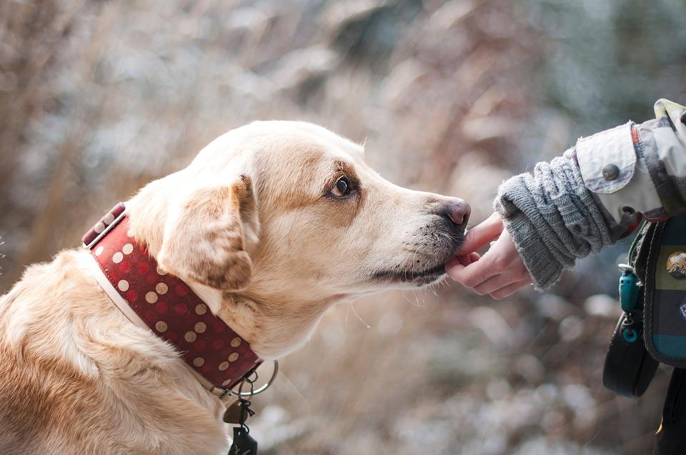 niña dando la mano a un perro