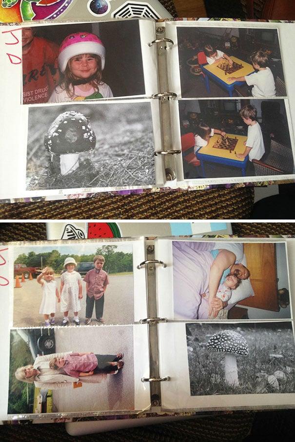 album de fotos con la imagen de un hongo