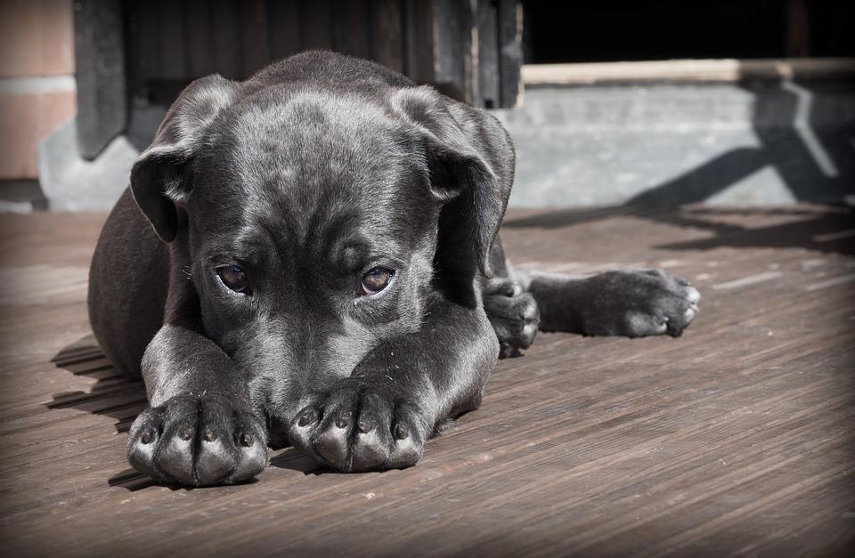 perrito timido