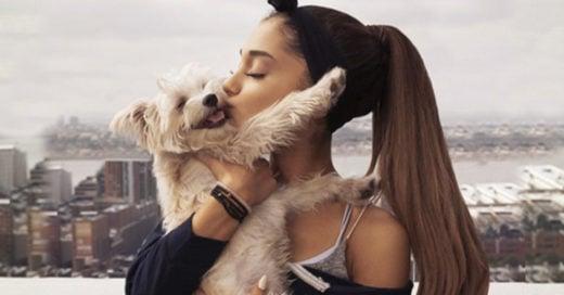 11 razones para querer adoptar un perro inmediatamente