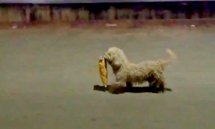 perro con bolsa en el ocico