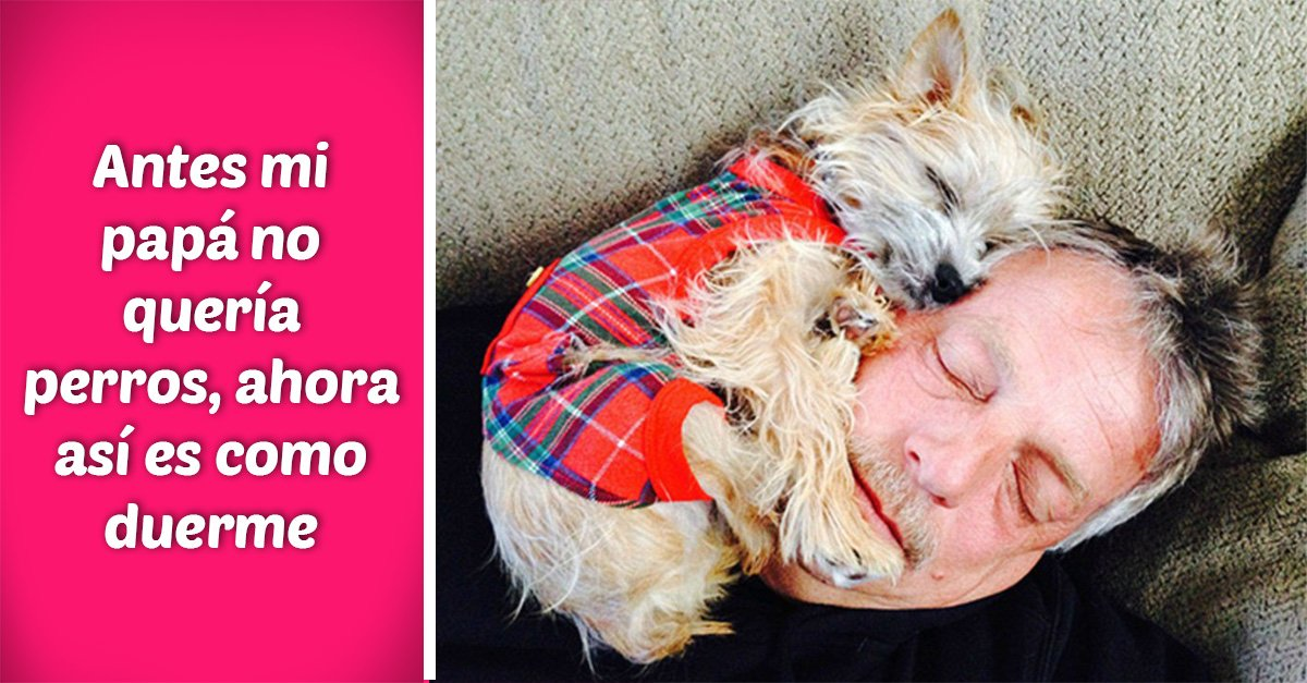 15 Padres que no querían perros, ¡sólo míralos ahora!