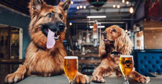 Cervecera deja que sus empleados falten una semana si tienen cachorros en casa