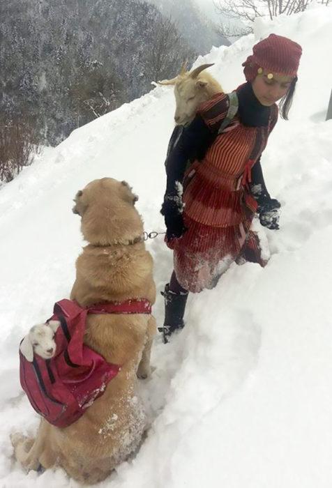 Chica rescatando a una cabra y a su bebé junto consu perro