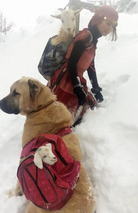 Chica caminando junto con su perro por la nieve