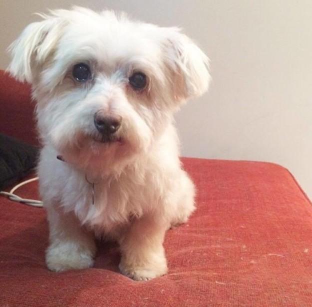 Perrito que fue rescatado de su dueño abusador
