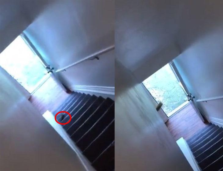 Rata volando por las escaleras