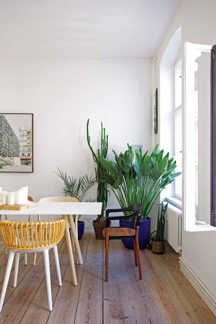 30 formas de usar plantas para decorar espacios de tu casa for Como puedo decorar mi sala comedor