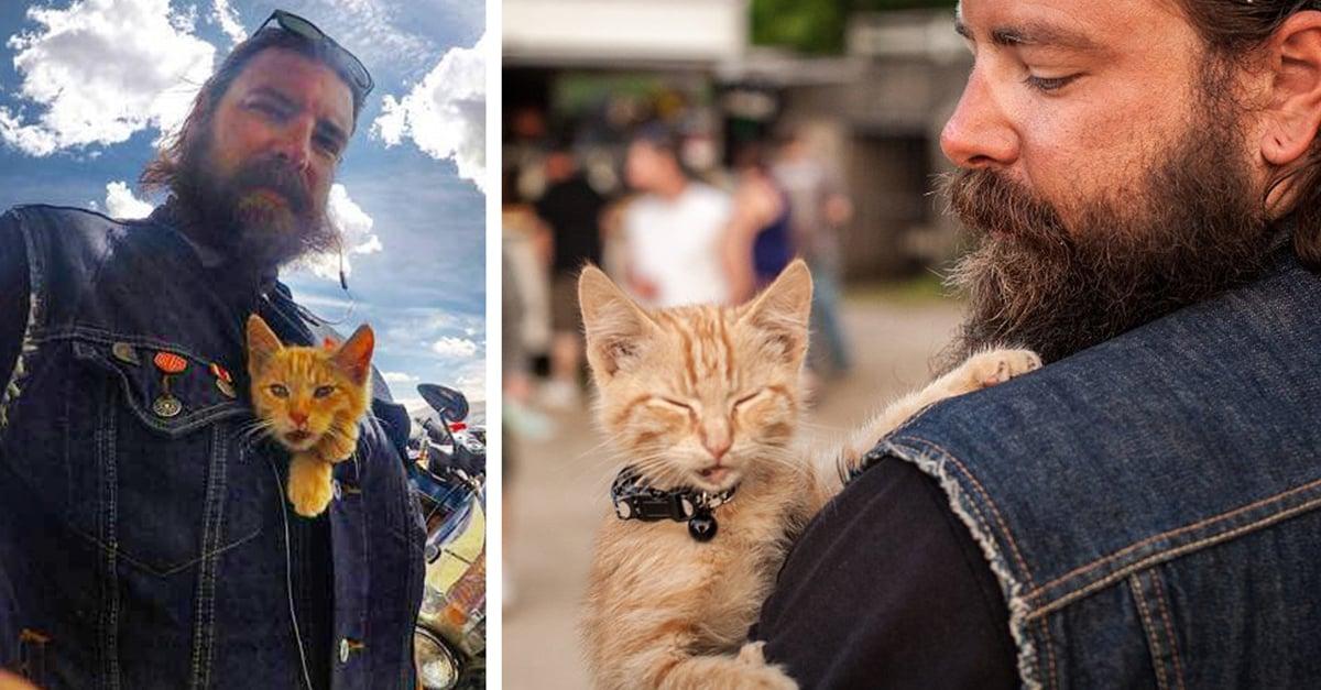 Este motociclista salvó a un gatito de morir y ahora es su compañero de viaje