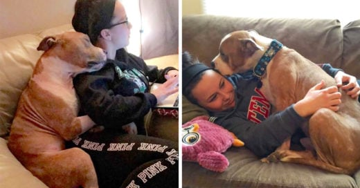 Este pit bull finalmente fue adoptado; ahora no deja de abrazar a su dueña
