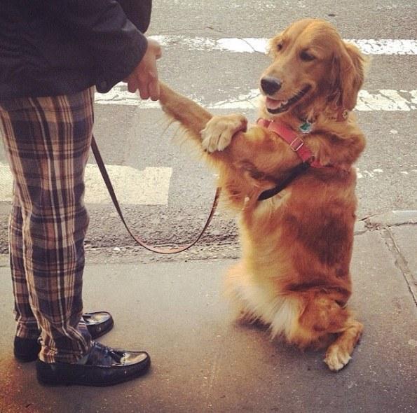 Perrita golden abrazando a una persona