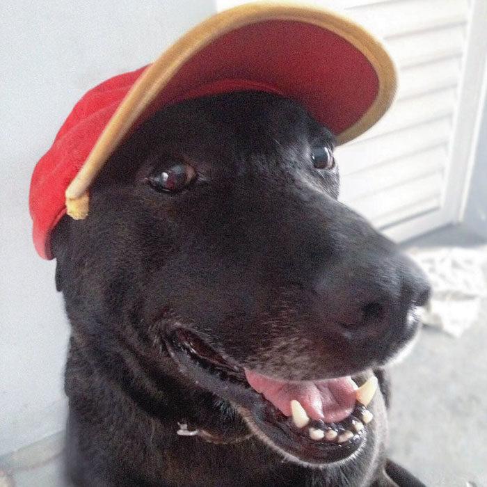 Perro que trabaja en una estación de servicio de gasolina en Brasil