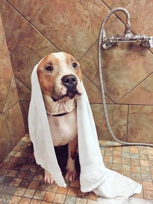 Perro después de haber sido bañado