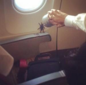 araña pasajera de avión