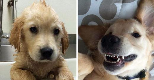 Este perrito ha conquistado a internet con sus mini brackets
