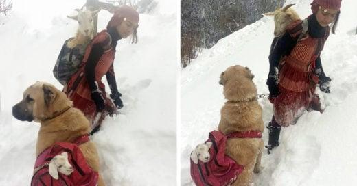 Esta chica de 11 años rescató a una cabra de una forma muy peculiar