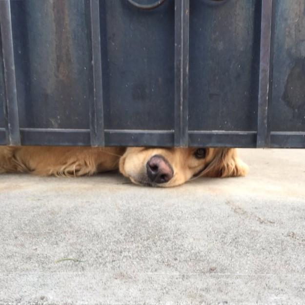 el perrito ralph