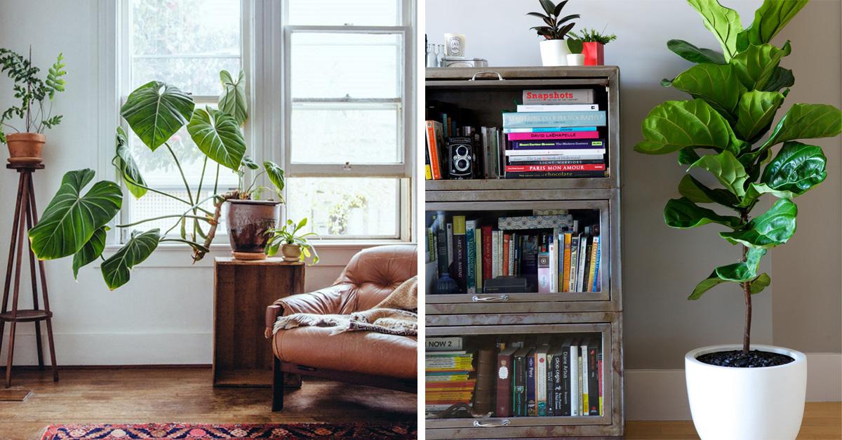 espacios de tu hogar que puedes decorar con plantas