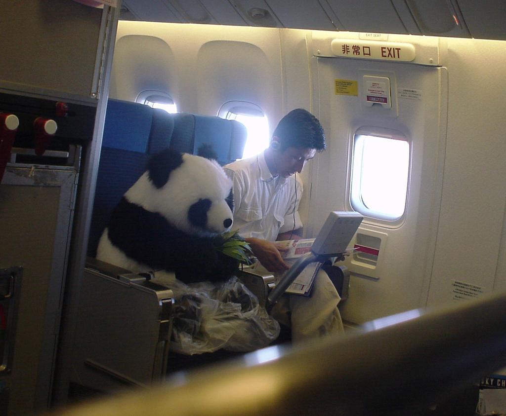 panda viajero
