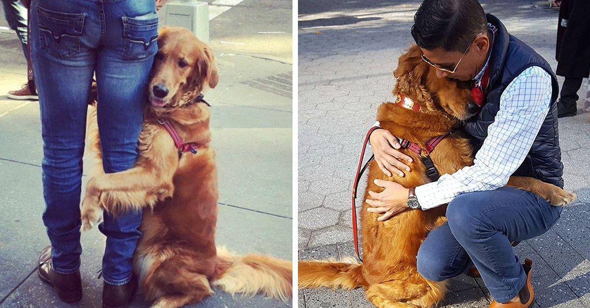 This Retriever Is Obsessed With Giving Hugs To Everyone He Meets
