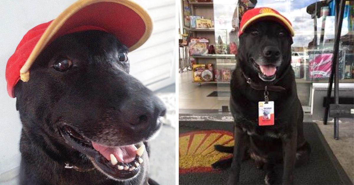 Perro abandonado en una estación de servicio obtiene un trabajo de tiempo completo