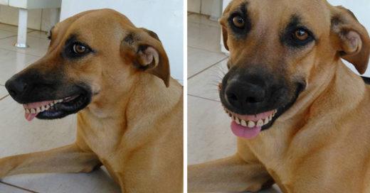 El dueño de esta perra casi muere al ver lo que ella tenía en la boca