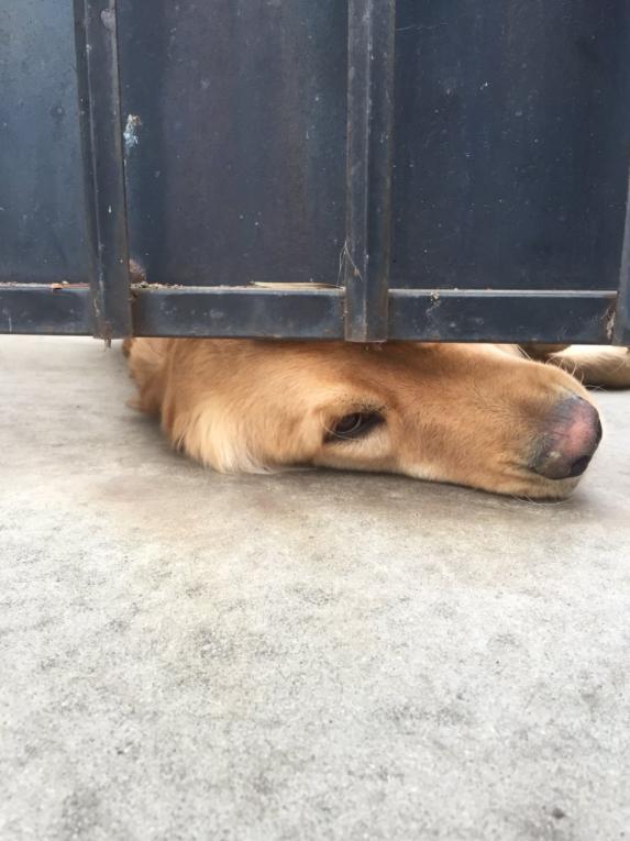ralph el perrito más lindo
