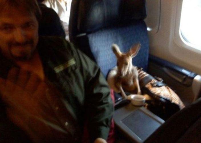 un canguro de viaje