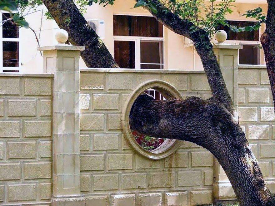 árbol atravesó muro