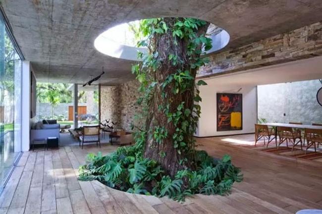 árbol en la sala