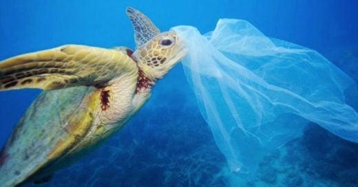 15 cosas que no sabías del plástico que usas