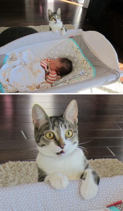 Gatito que ve por primera vez a un bebé