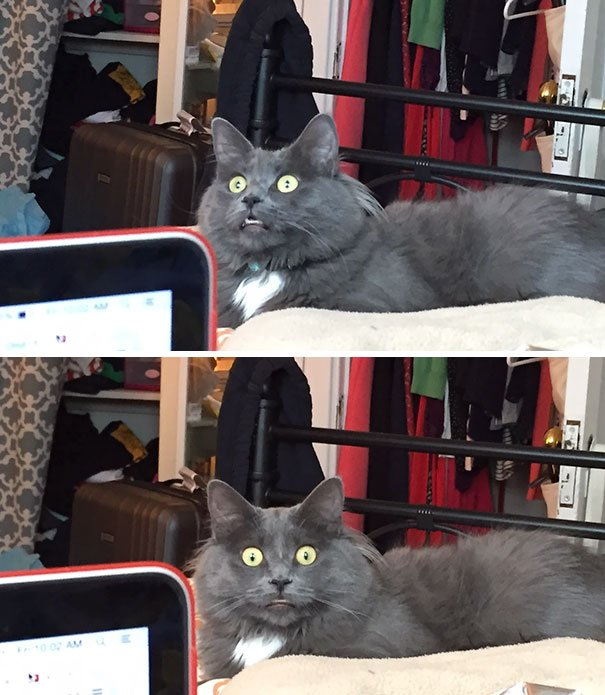 Gato asombrado