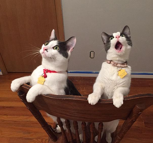 Gatitos asombrados