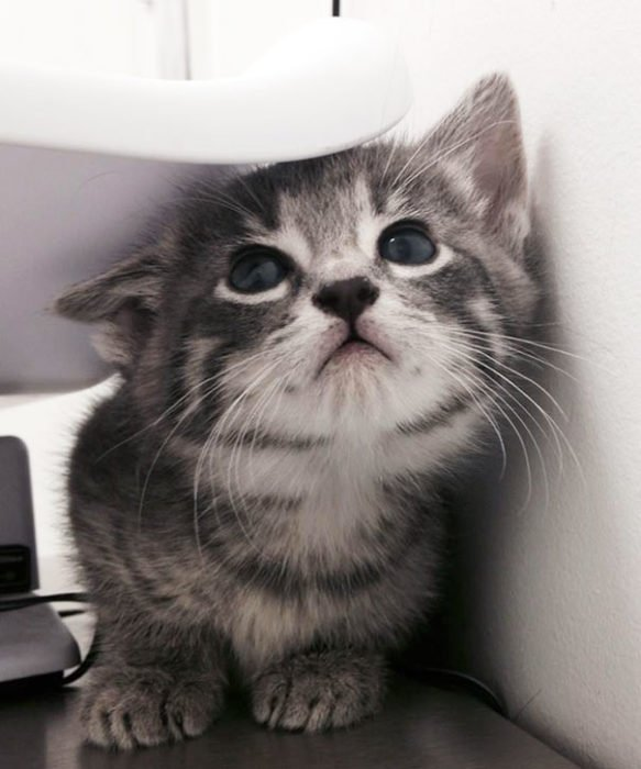Gatito asustado