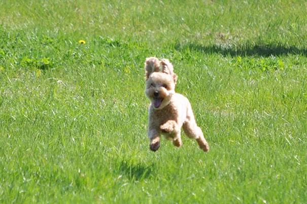 Perrito corriendo feliz