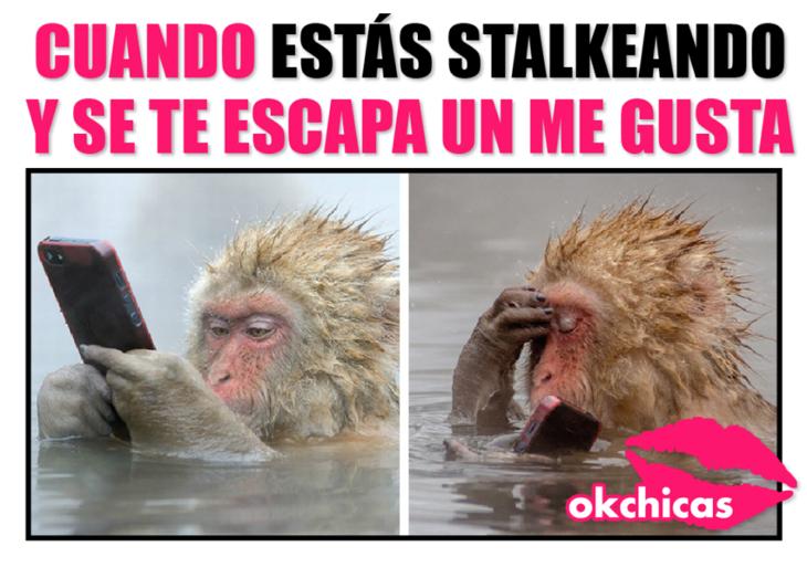 meme ok chicas mono en el agua