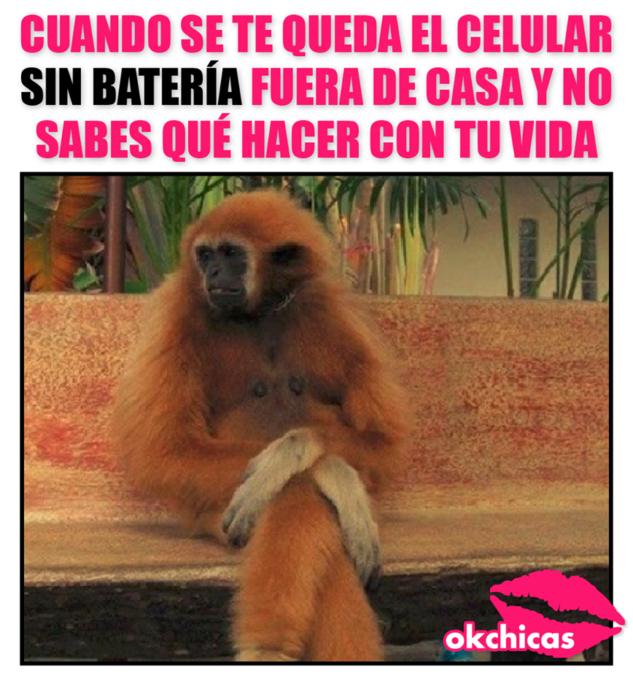 meme ok chicas mono sentado cruzado de pies