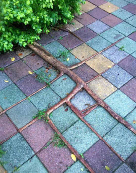 Rama de árbol que creció junto con el piso